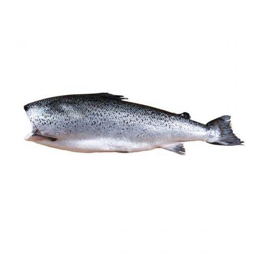 Salmon Headless Fresh