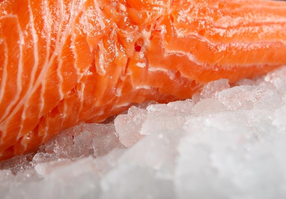 frozen food - fish