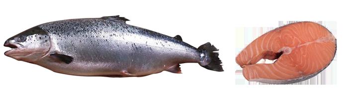 salmon - food distributor bali