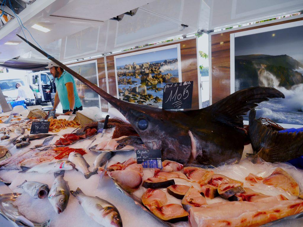 ikan marlin beku
